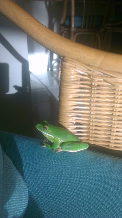 Kiteboarding Cairns - Green Frog in the House (4)